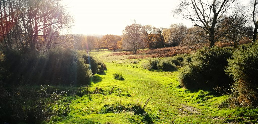 Sutton Park Nature Reserve